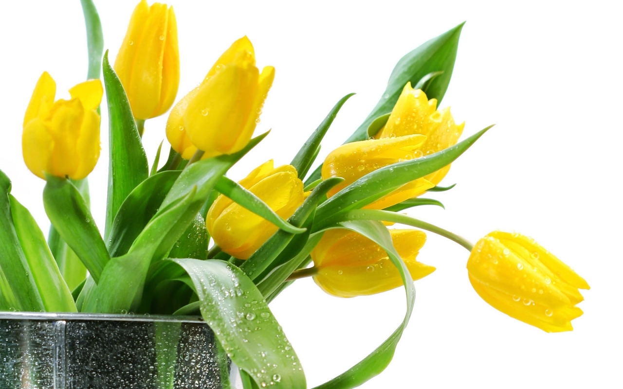 50305 скачать обои Растения, Цветы, Тюльпаны, Букеты - заставки и картинки бесплатно