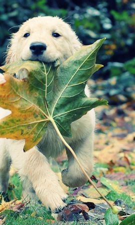 46406 baixar papel de parede Animais, Cães - protetores de tela e imagens gratuitamente