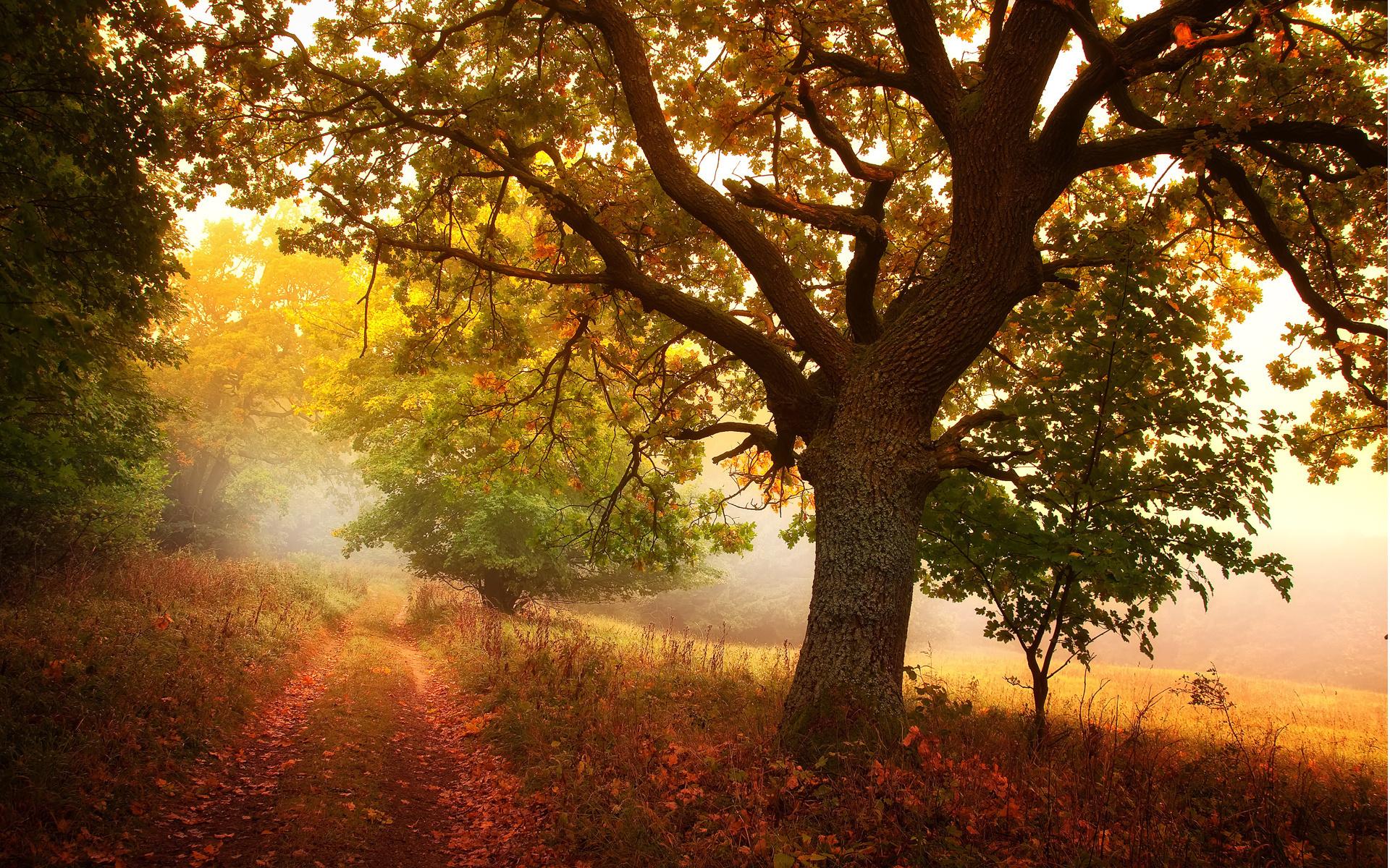 15558 скачать обои Пейзаж, Дороги, Осень, Листья - заставки и картинки бесплатно