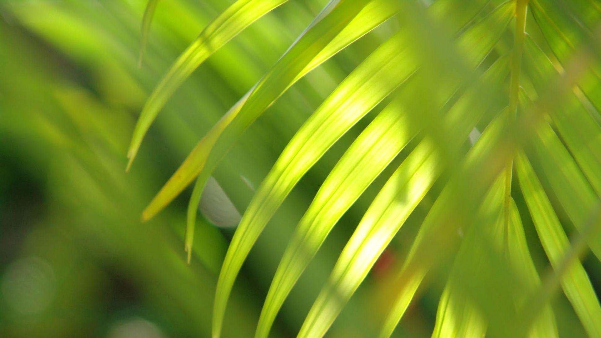 134588 descargar fondo de pantalla Naturaleza, Rama, Hojas, Brillar, Luz: protectores de pantalla e imágenes gratis