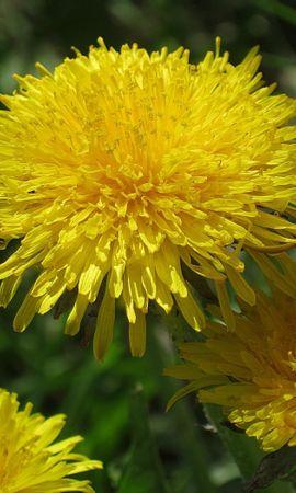 46130 descargar fondo de pantalla Plantas, Flores: protectores de pantalla e imágenes gratis