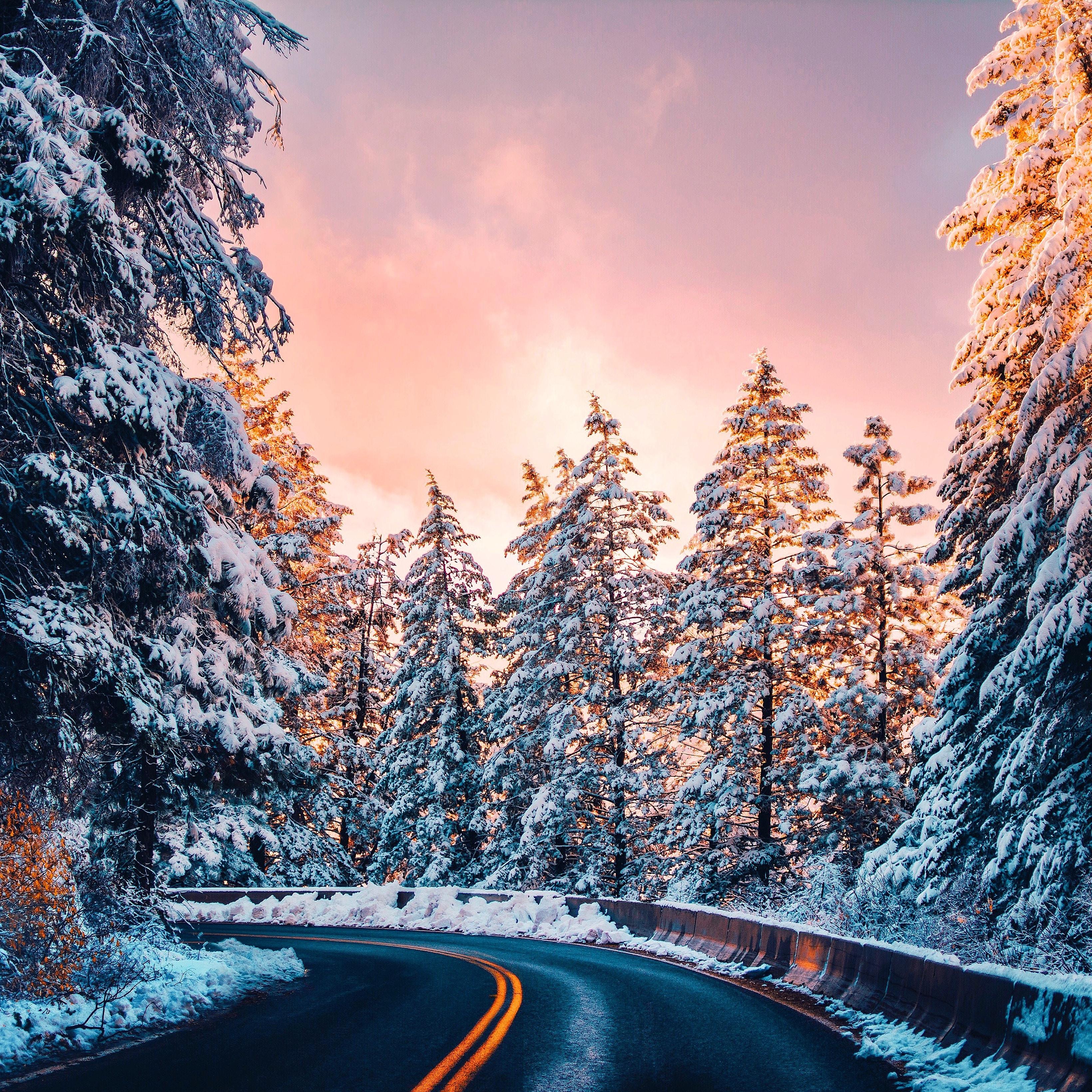 136806 скачать обои Снег, Закат, Дорога, Природа, Деревья, Поворот - заставки и картинки бесплатно