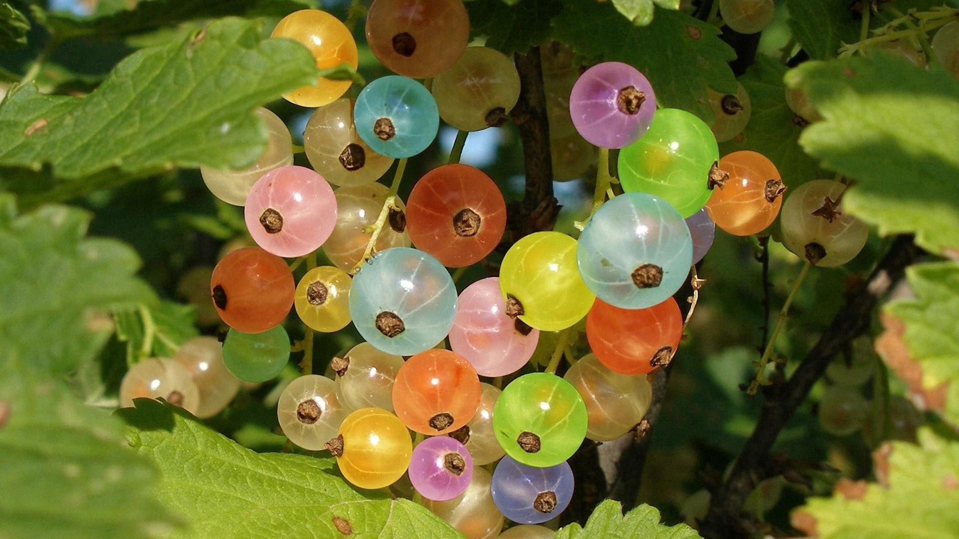 Download free Gooseberry HD pictures