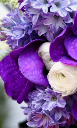 45929 télécharger le fond d'écran Plantes, Fleurs, Bouquets - économiseurs d'écran et images gratuitement