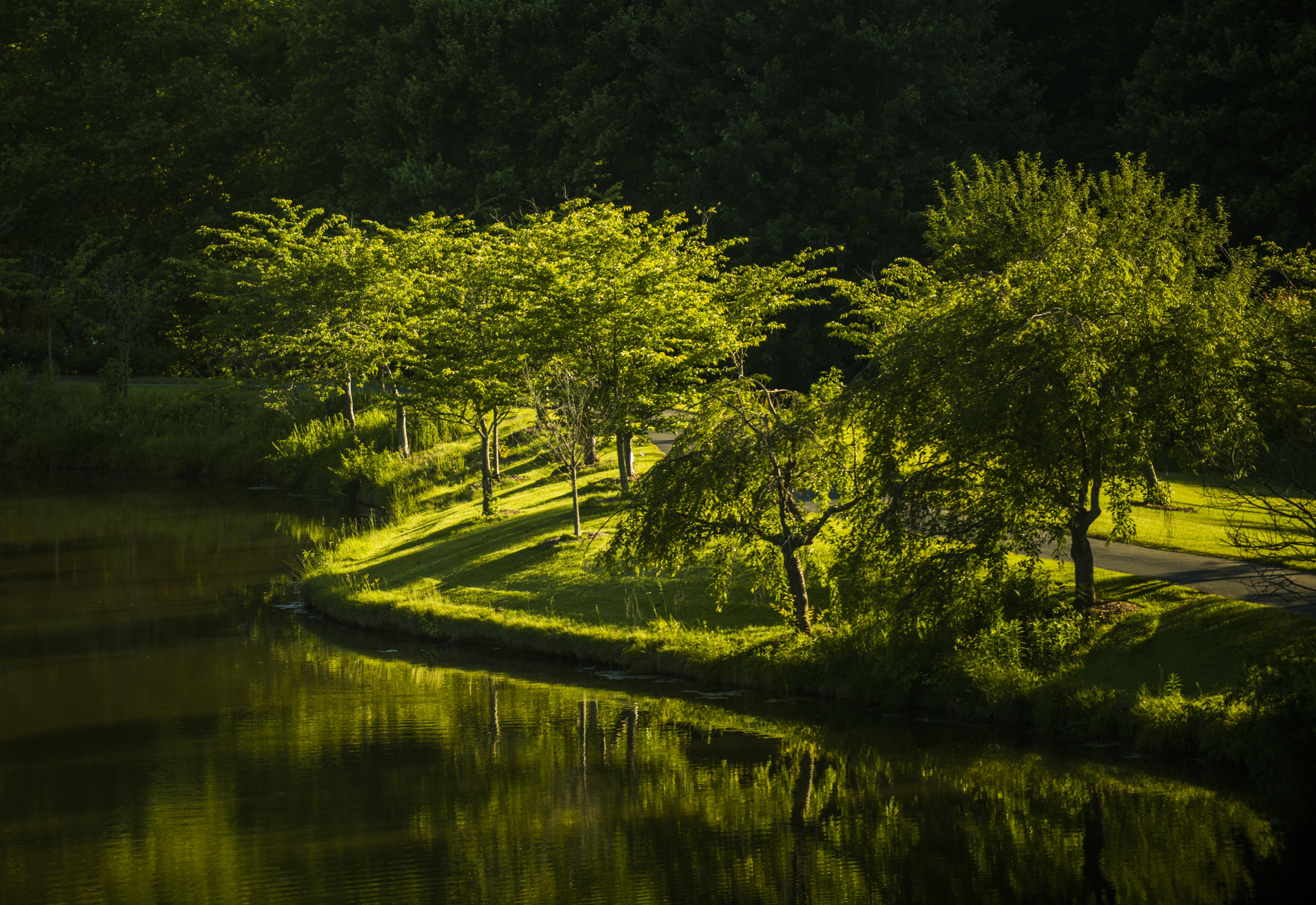 156614壁紙のダウンロードバージニア, バージニア州, 公園, 湖, 自然, 木-スクリーンセーバーと写真を無料で