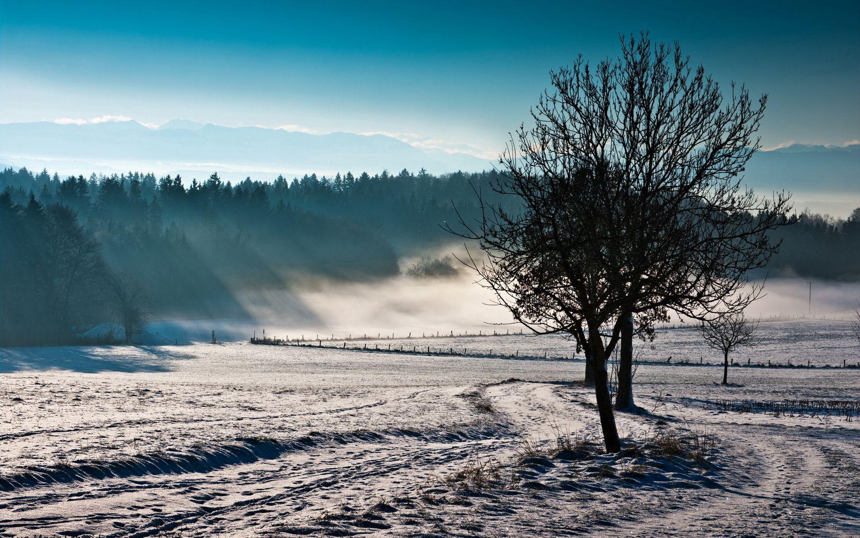 78087 скачать обои Природа, Деревья, Туман, Зима, Холод, Свежесть, Поле - заставки и картинки бесплатно