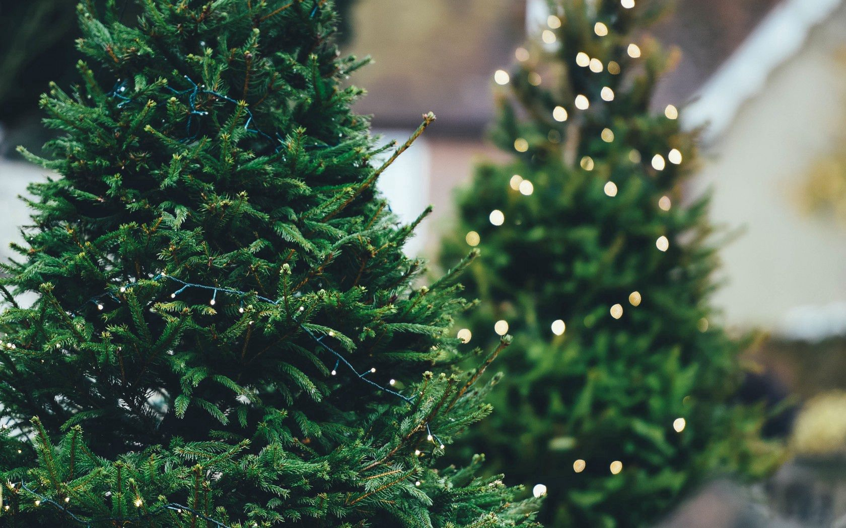 153855 Screensavers and Wallpapers Spruce for phone. Download Nature, Wood, Tree, Branches, Spruce, Fir, Garland pictures for free