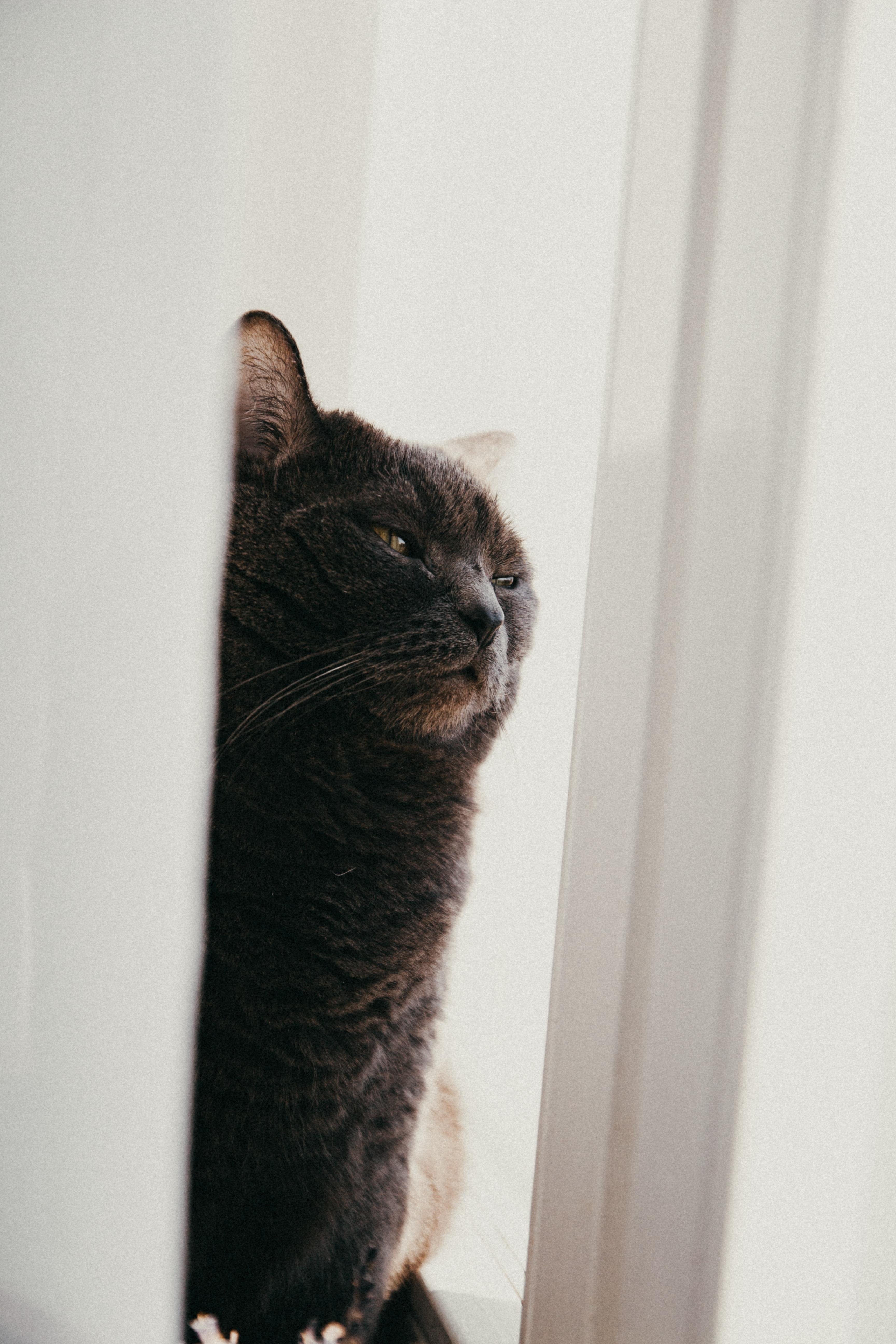 89029 download wallpaper Animals, Cat, Pet, Funny, Sleep, Dream, Cloth screensavers and pictures for free