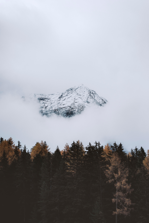 108784 免費下載壁紙 性质, 山, 戈拉, 顶点, 云, 云端, 树 屏保和圖片