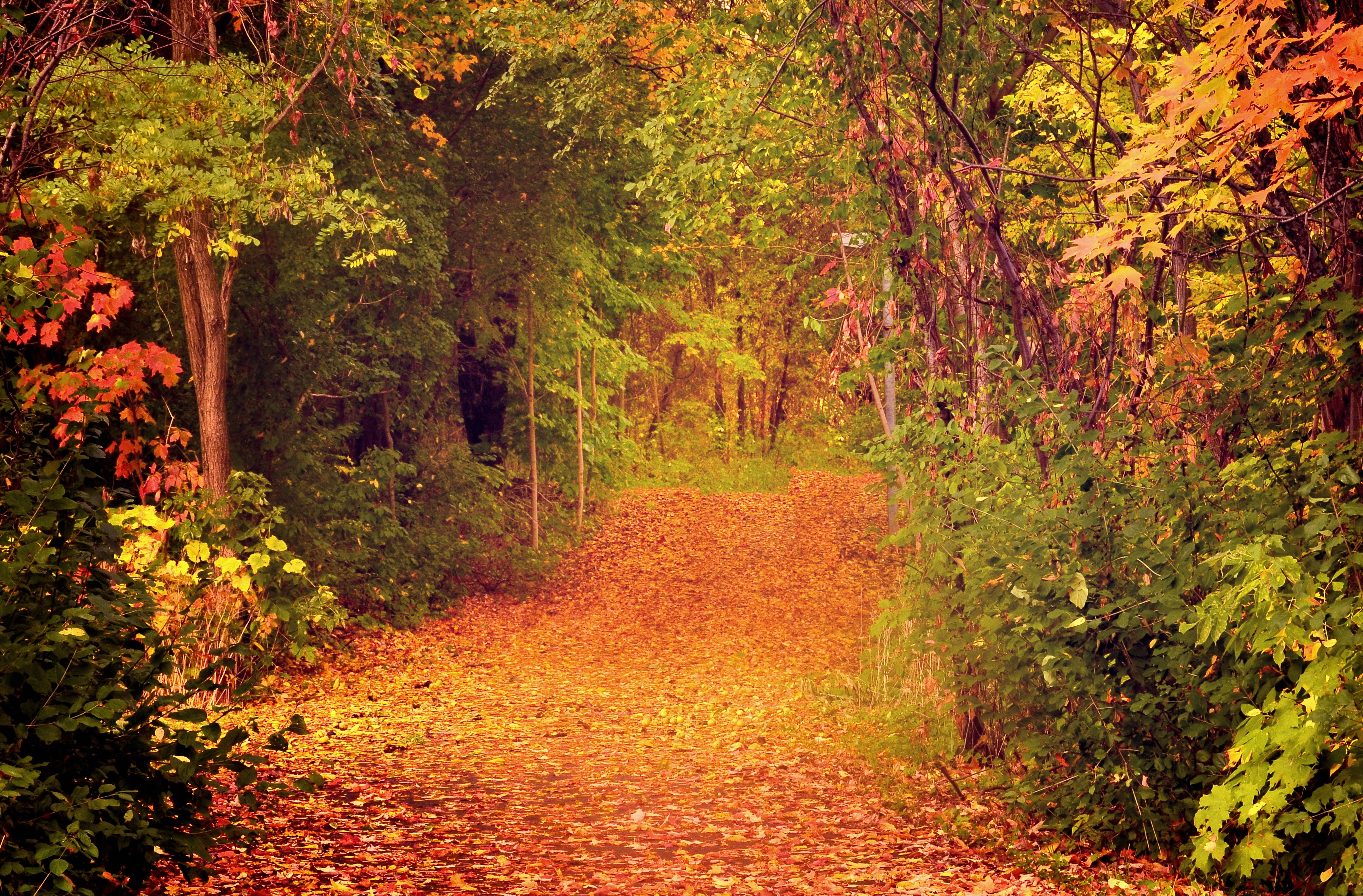 144166 Screensavers and Wallpapers Foliage for phone. Download Nature, Trees, Autumn, Forest, Foliage pictures for free
