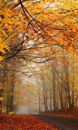40132 скачать обои Пейзаж, Дороги, Осень - заставки и картинки бесплатно