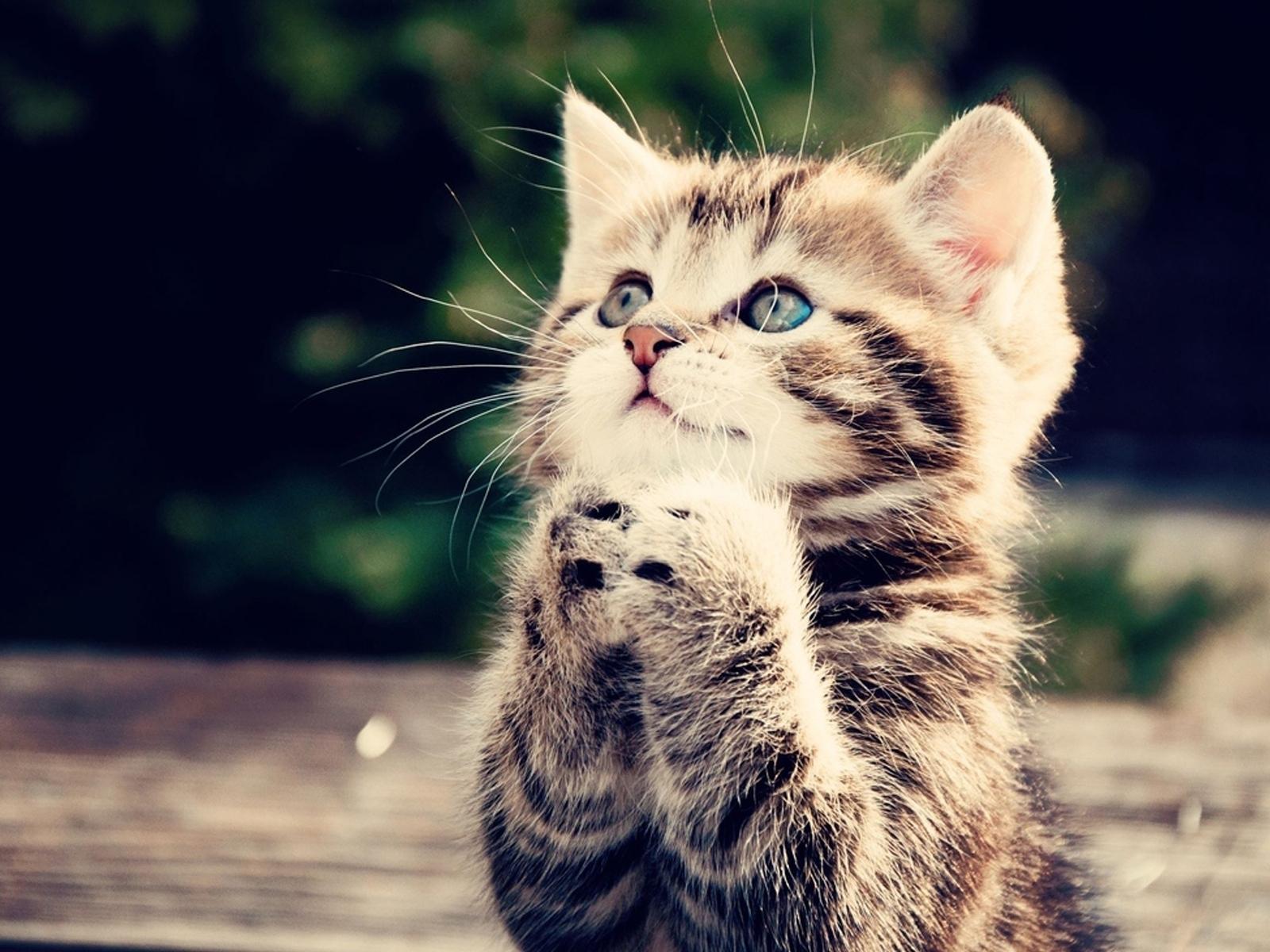 14142 скачать обои Кошки (Коты, Котики), Животные - заставки и картинки бесплатно