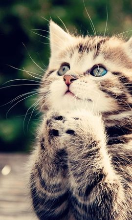 14142 download wallpaper Animals, Cats screensavers and pictures for free
