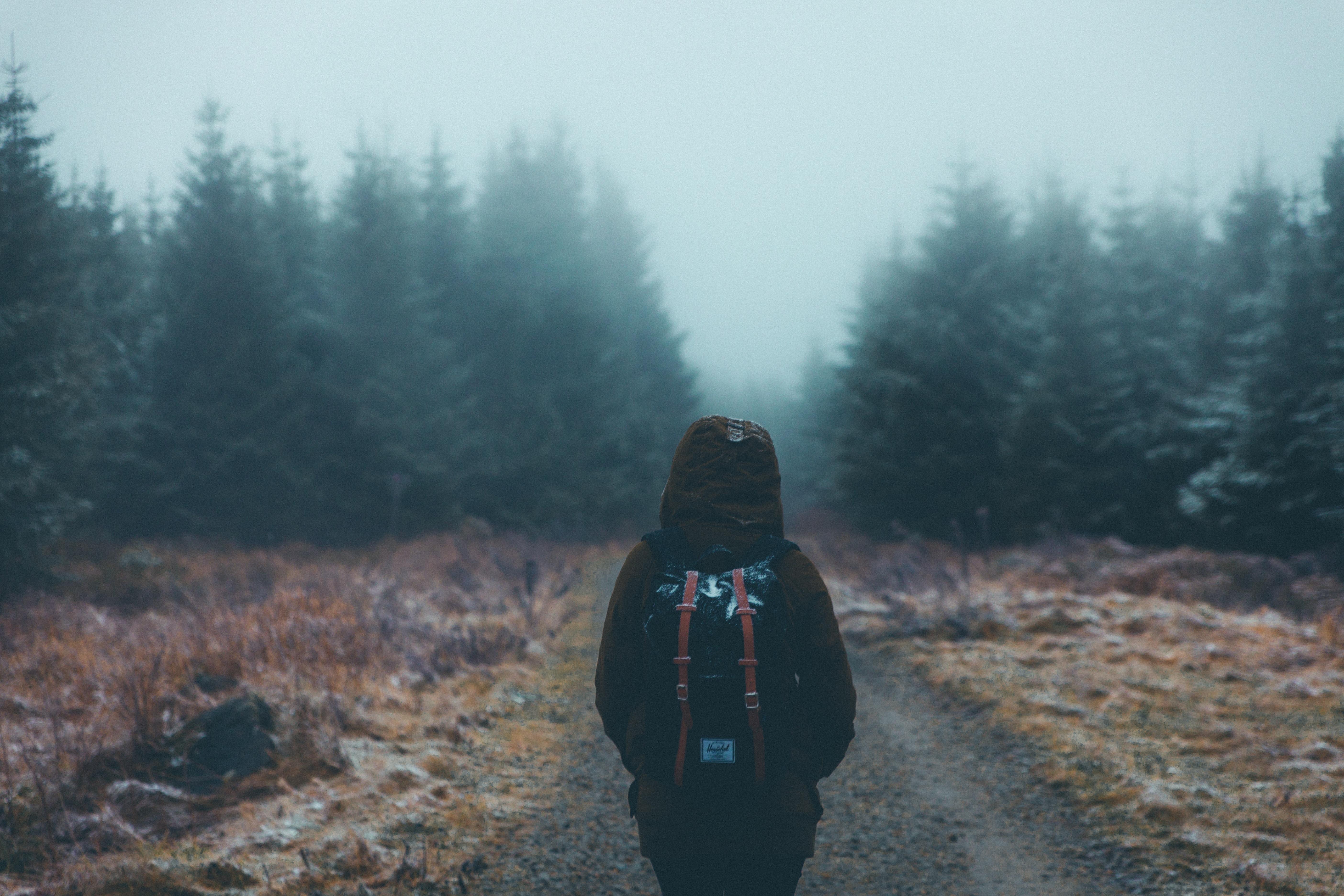 100526 Hintergrundbild 240x400 kostenlos auf deinem Handy, lade Bilder Verschiedenes, Sonstige, Wald, Nebel, Bummel, Spaziergang, Rucksack, Tourist, Touristischen 240x400 auf dein Handy herunter