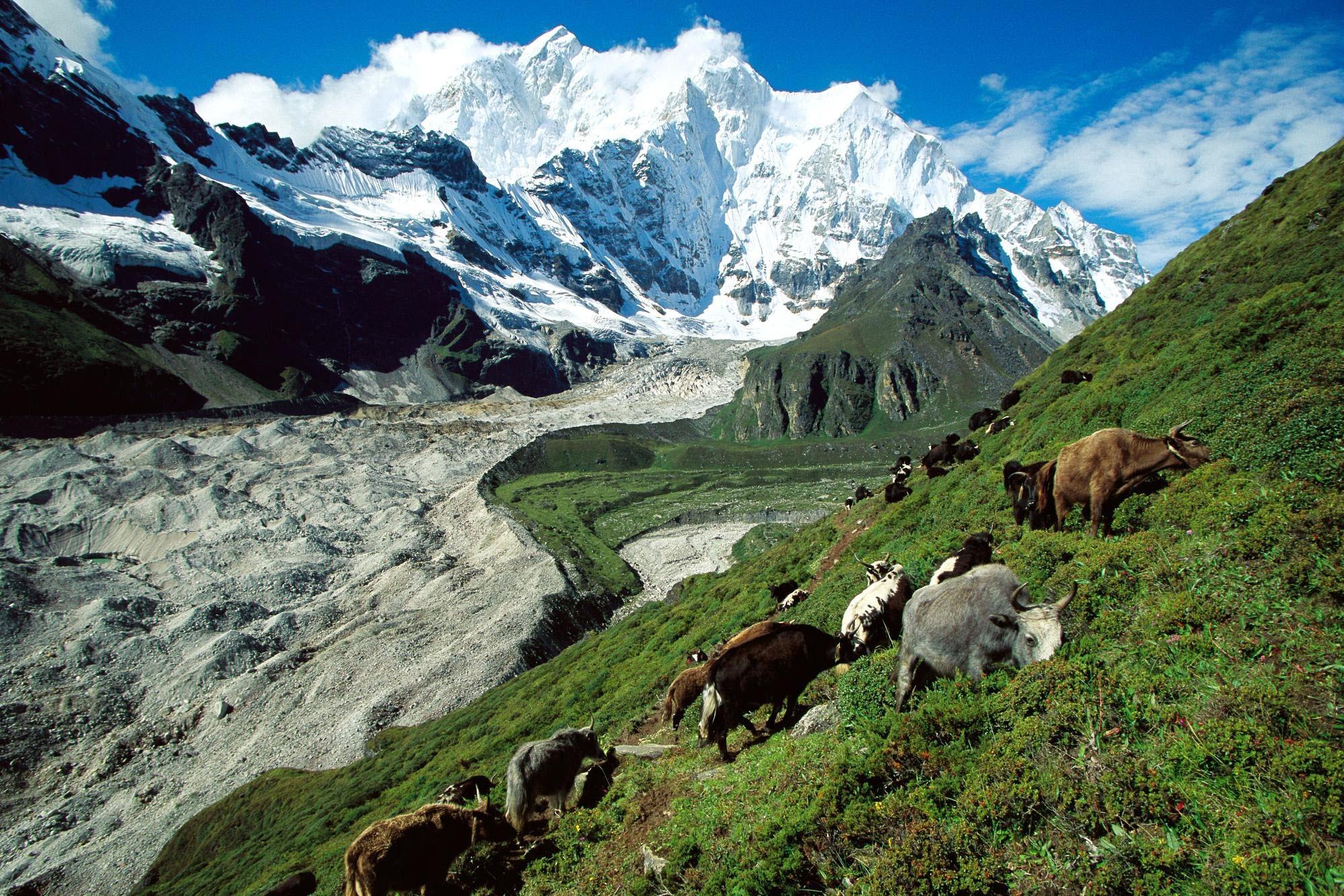 60893 скачать обои Природа, Пастбище, Склон, Трава, Горы, Коровы - заставки и картинки бесплатно