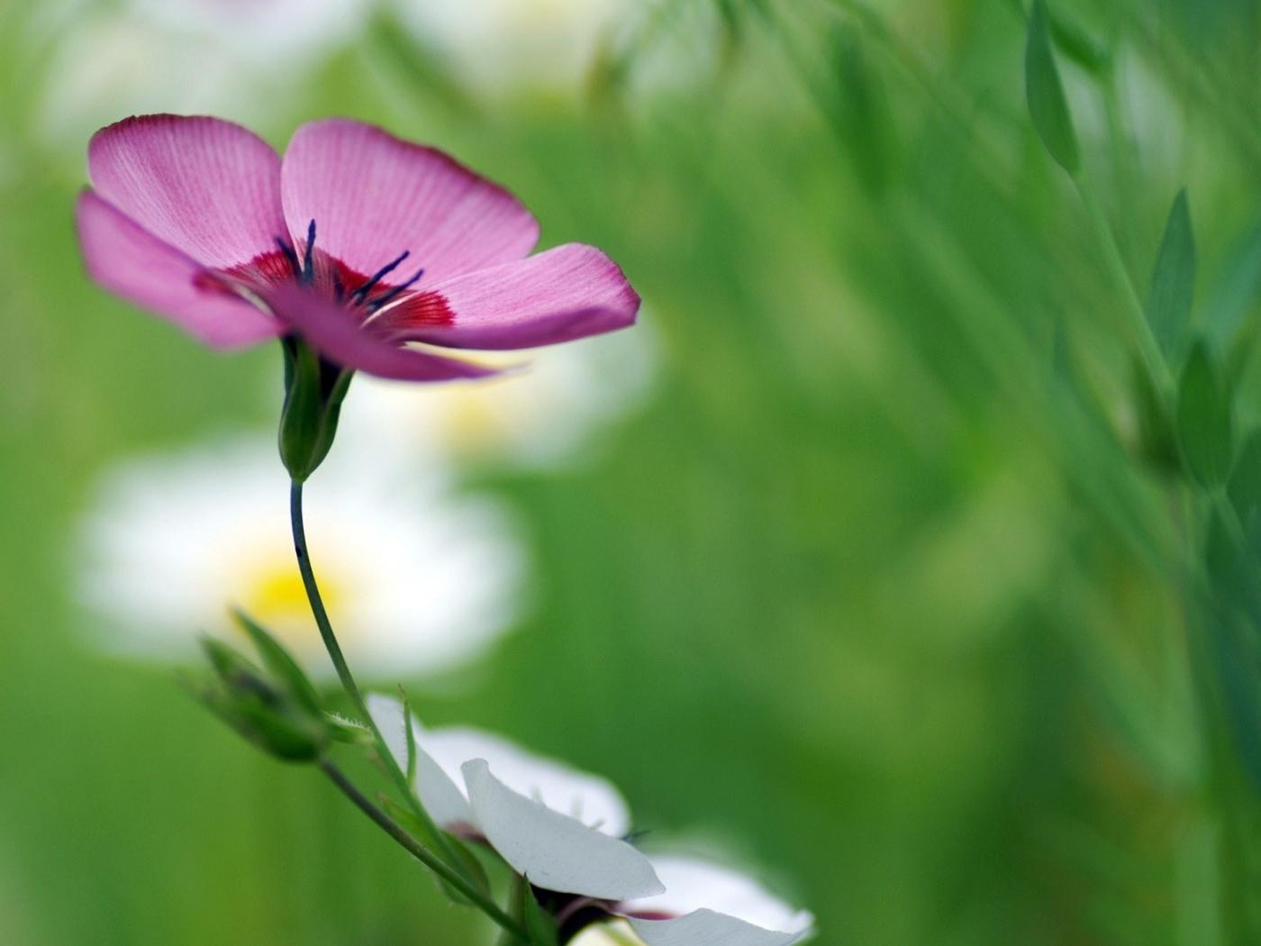 9249 скачать обои Растения, Цветы - заставки и картинки бесплатно