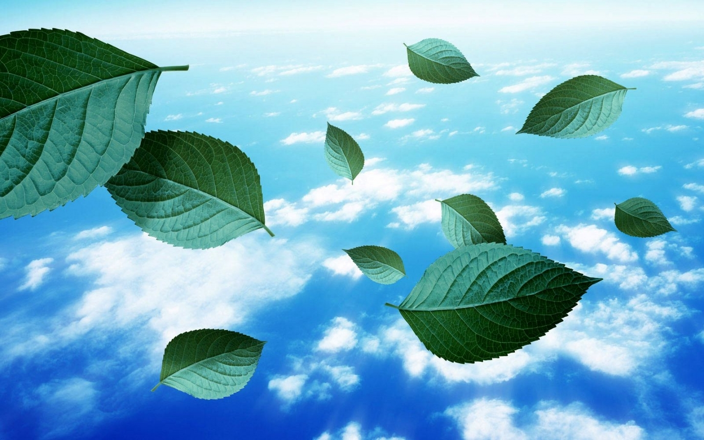 24432 скачать обои Растения, Пейзаж, Небо, Листья, Облака - заставки и картинки бесплатно