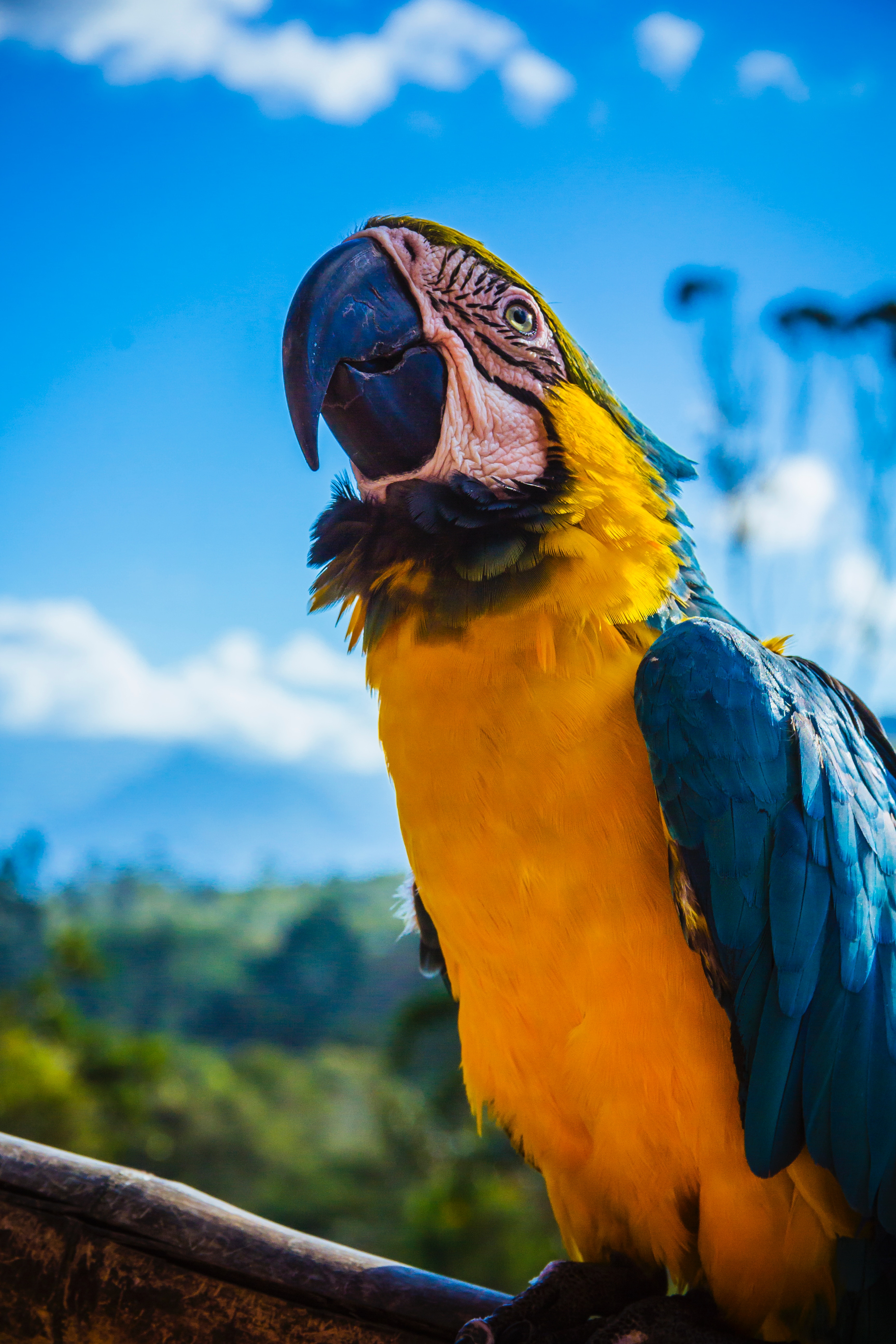 100411 download wallpaper Animals, Parrots, Macaw, Bird, Color, Beak screensavers and pictures for free