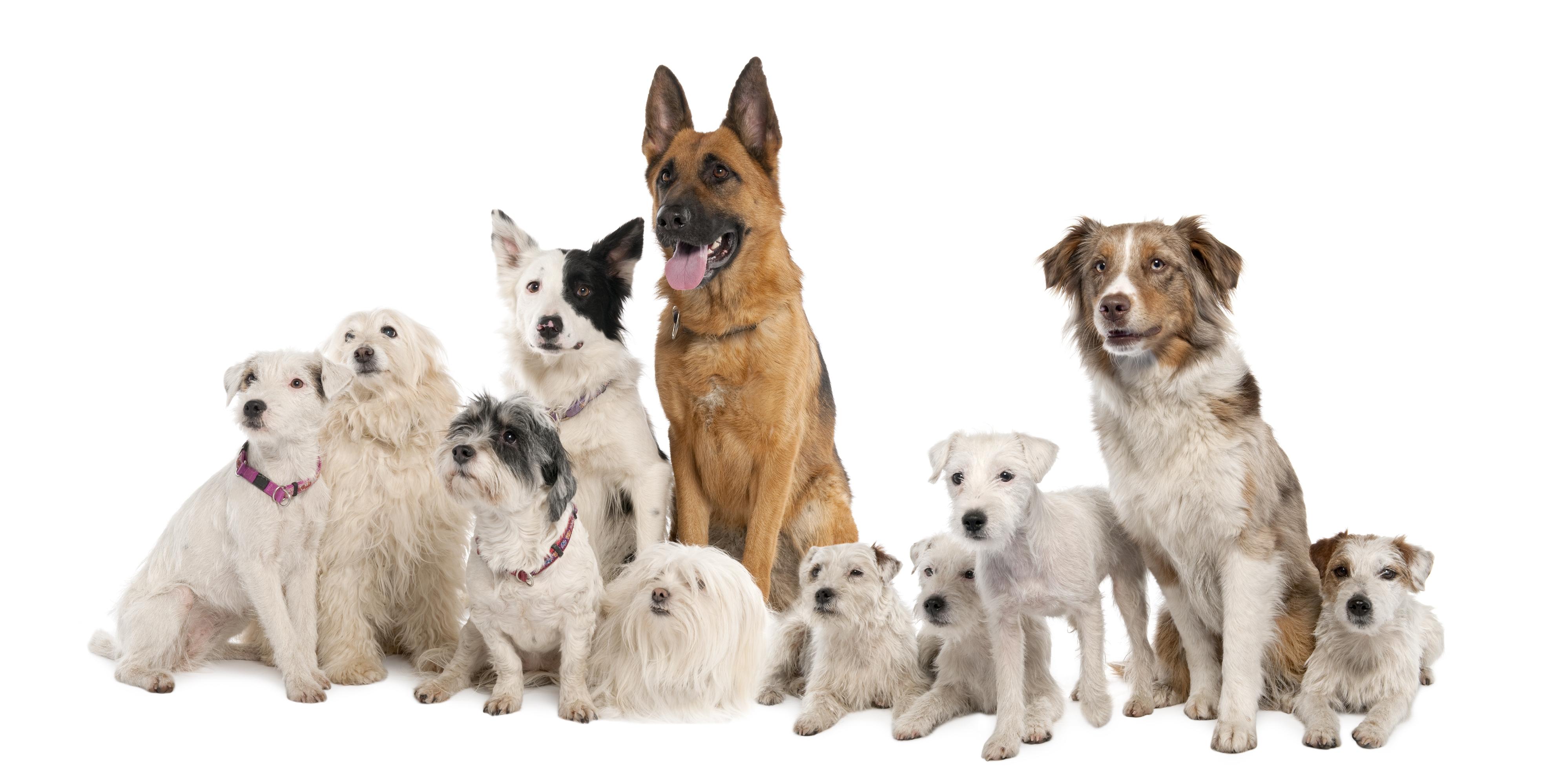 114341 descargar fondo de pantalla Animales, Perros, Variedades, Variedad, Un Montón De, Multitud, Sentarse: protectores de pantalla e imágenes gratis