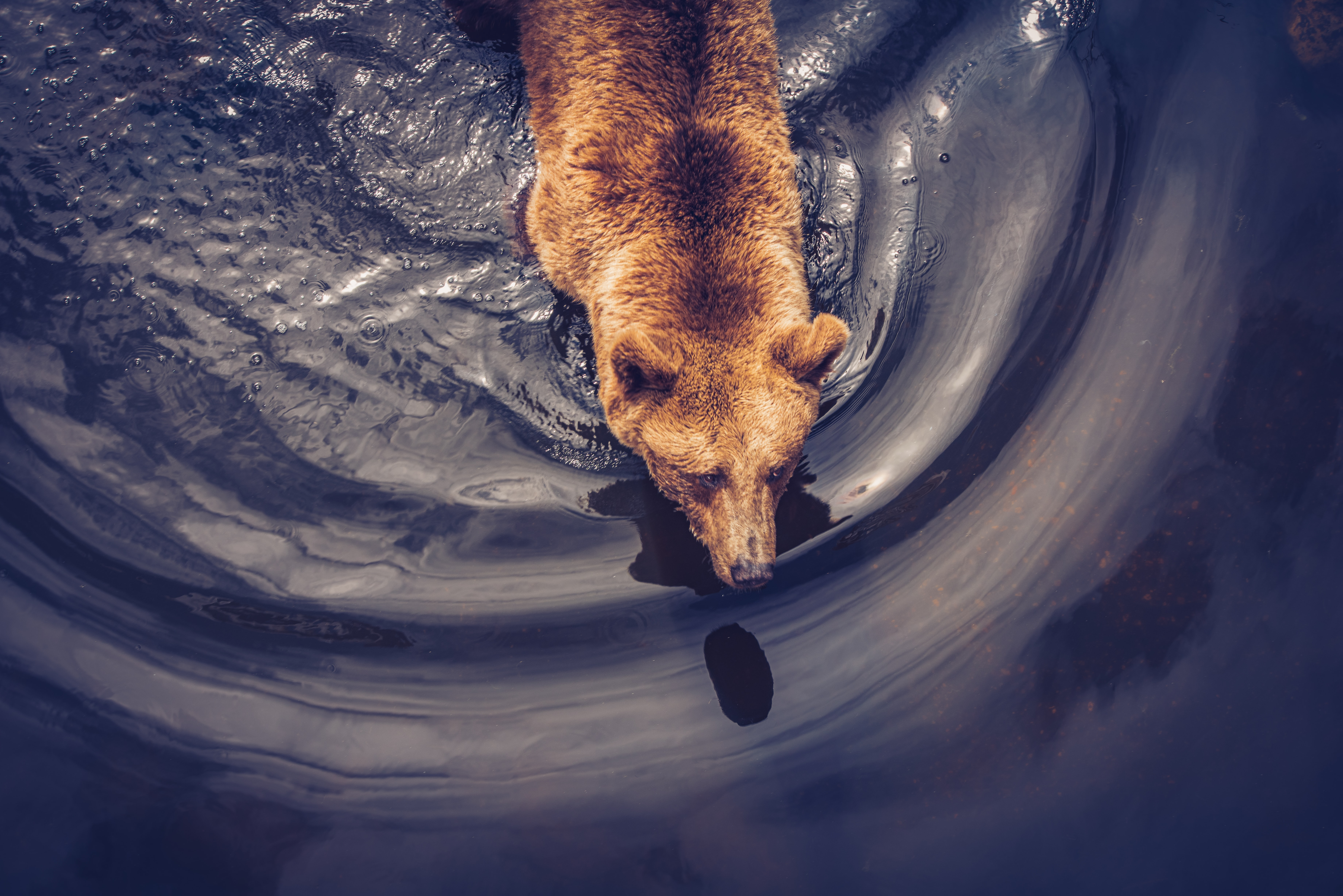 108730 download wallpaper Animals, Bear, Brown, Predator, View From Above screensavers and pictures for free