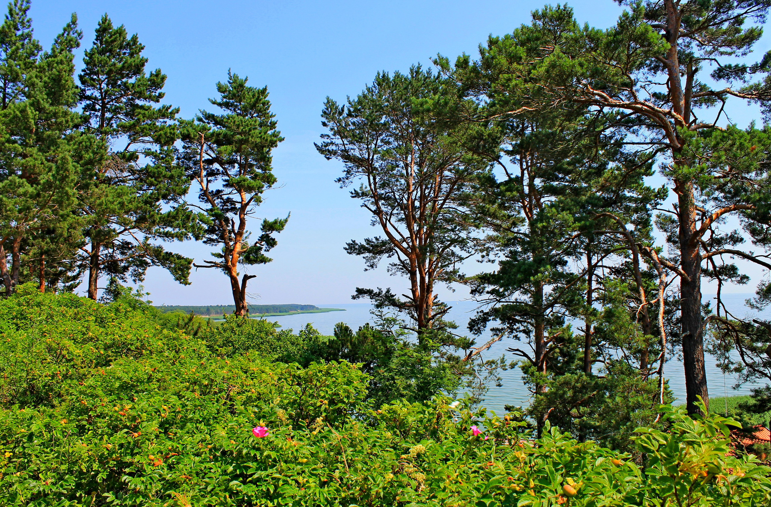 96527 download wallpaper Nature, Trees, Sea, Pine, Lithuania, Elevation screensavers and pictures for free