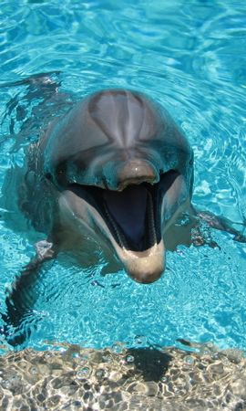 142199 download wallpaper Animals, Dolphin, Smile, Water, Pool screensavers and pictures for free
