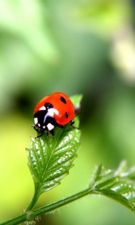 34764 Screensavers and Wallpapers Insects for phone. Download Insects, Ladybugs pictures for free