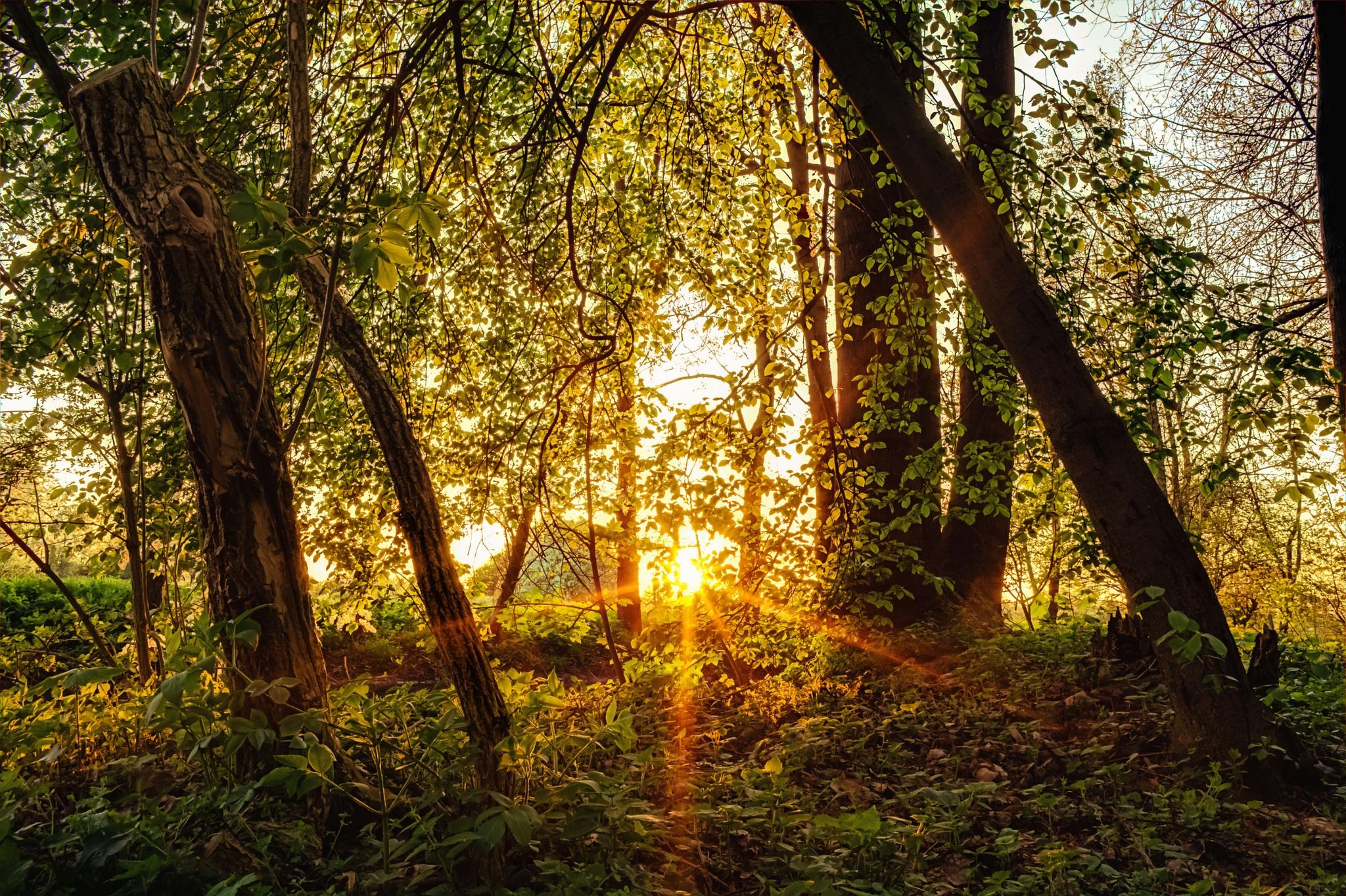 119368壁紙のダウンロード自然, 森林, 森, 木, ビーム, 光線, サン-スクリーンセーバーと写真を無料で