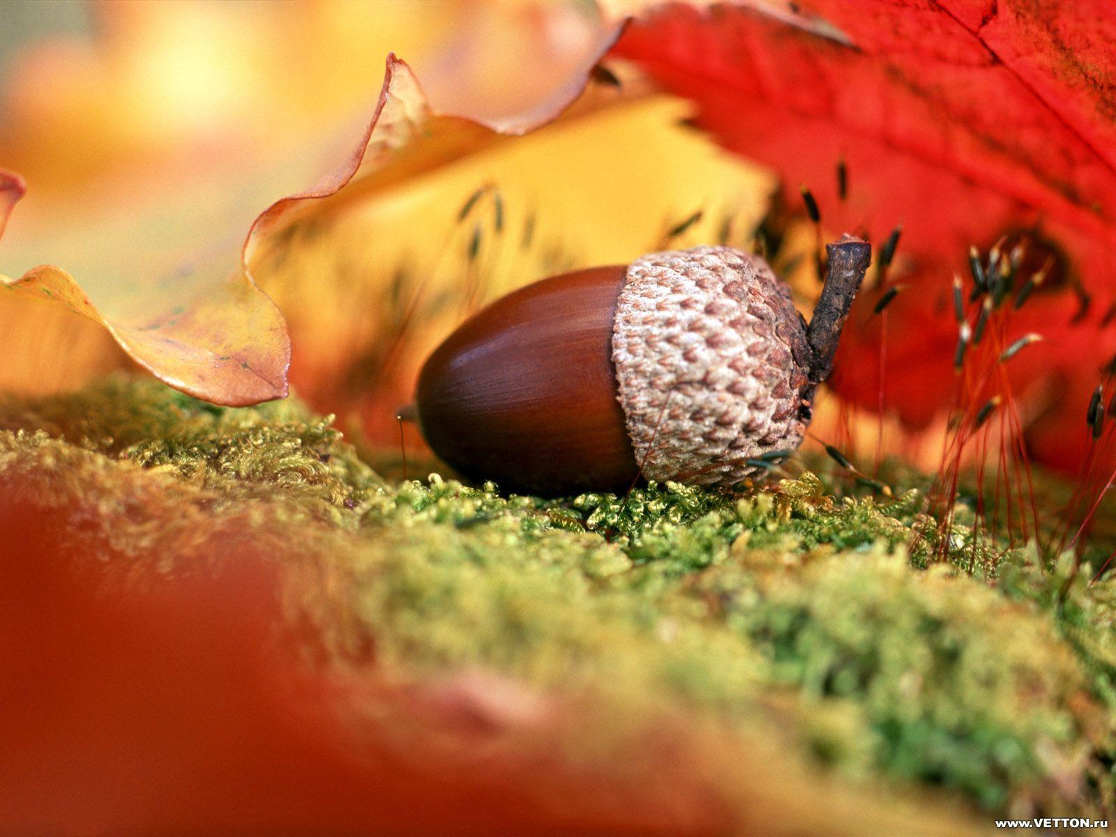 10777 скачать обои Фон, Осень, Листья - заставки и картинки бесплатно