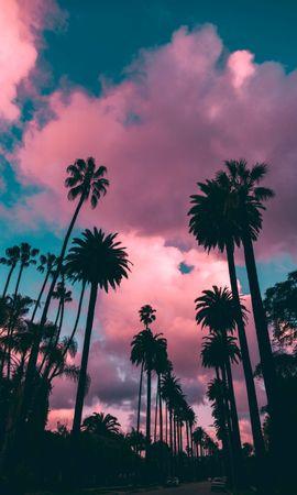 90865 baixar papel de parede Natureza, Pôr Do Sol, Nuvens, Trópicos, Céu, Poroso, Palms - protetores de tela e imagens gratuitamente