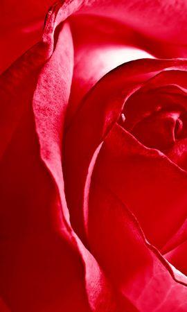 41890 télécharger le fond d'écran Plantes, Roses - économiseurs d'écran et images gratuitement