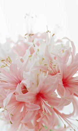 22732 скачать обои Растения, Цветы - заставки и картинки бесплатно
