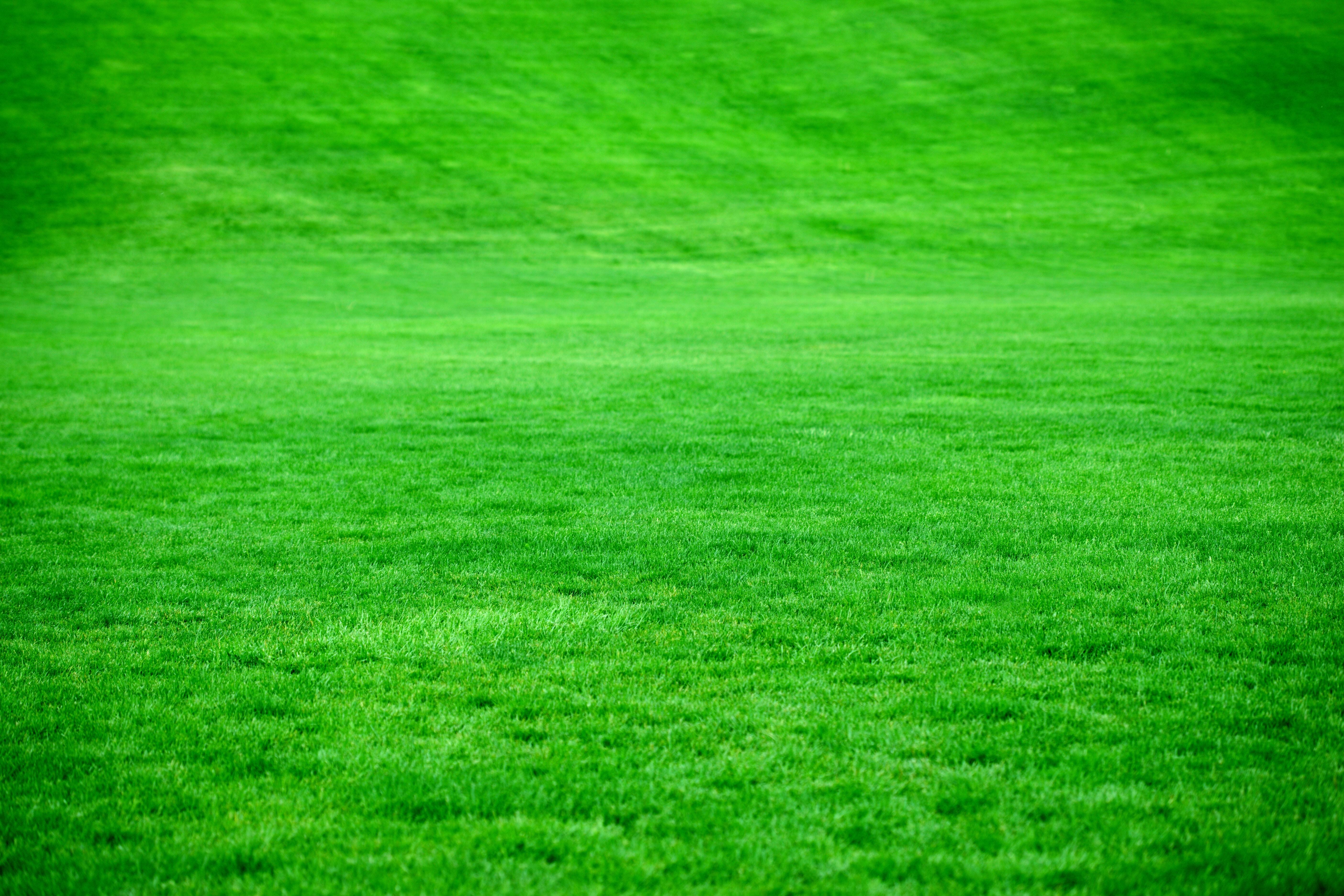 84604 免費下載壁紙 性质, 草, 草地, 草坪, 绿色的, 明亮的, 明亮 屏保和圖片