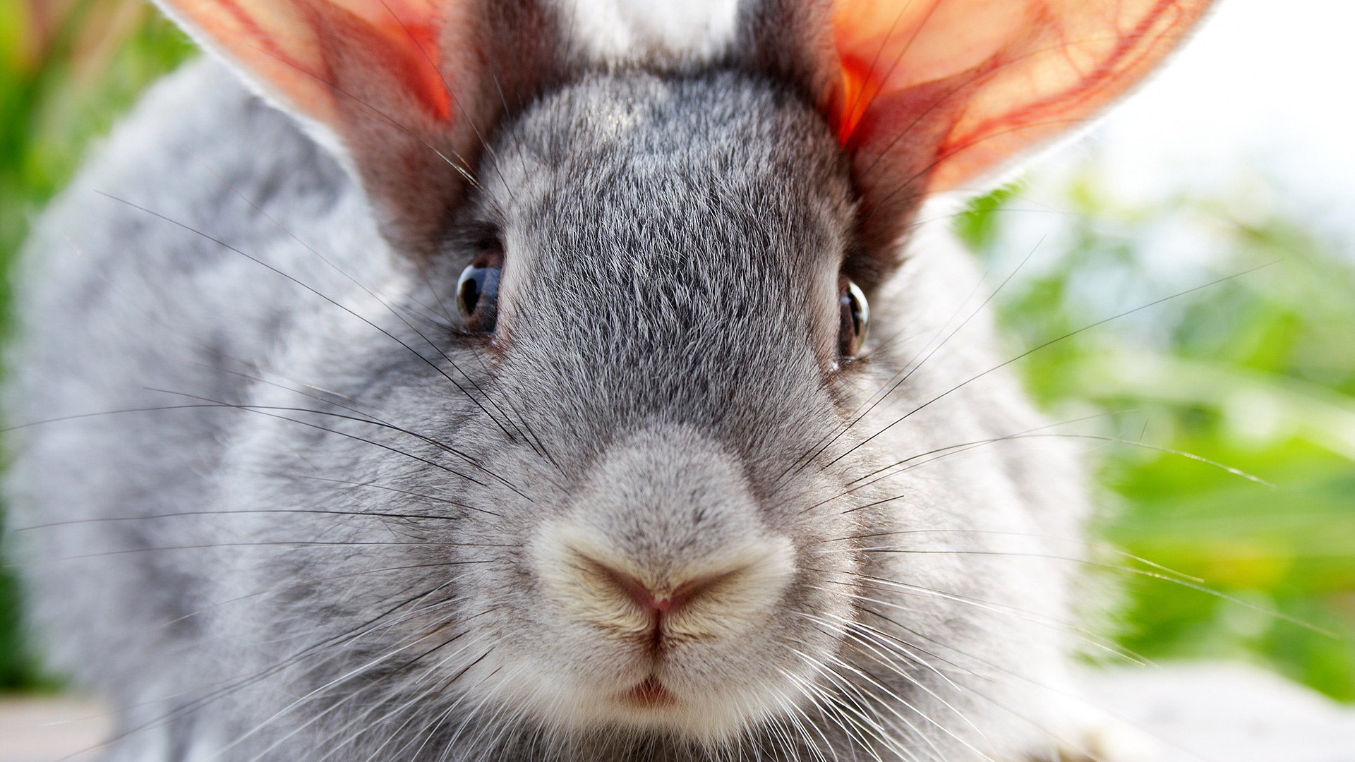 28191 download wallpaper Animals, Rabbits screensavers and pictures for free