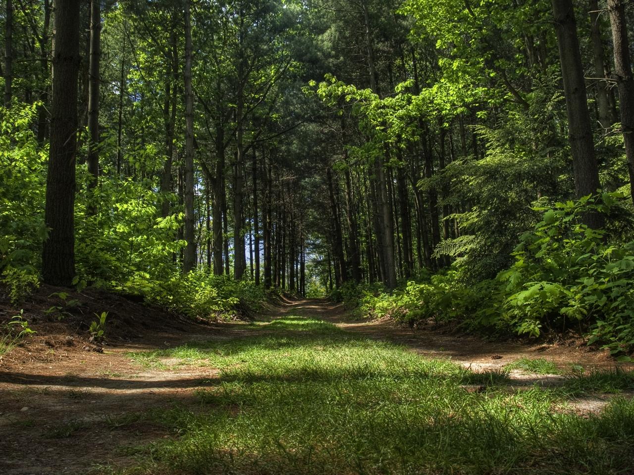 37218 скачать обои Пейзаж, Деревья, Дороги - заставки и картинки бесплатно