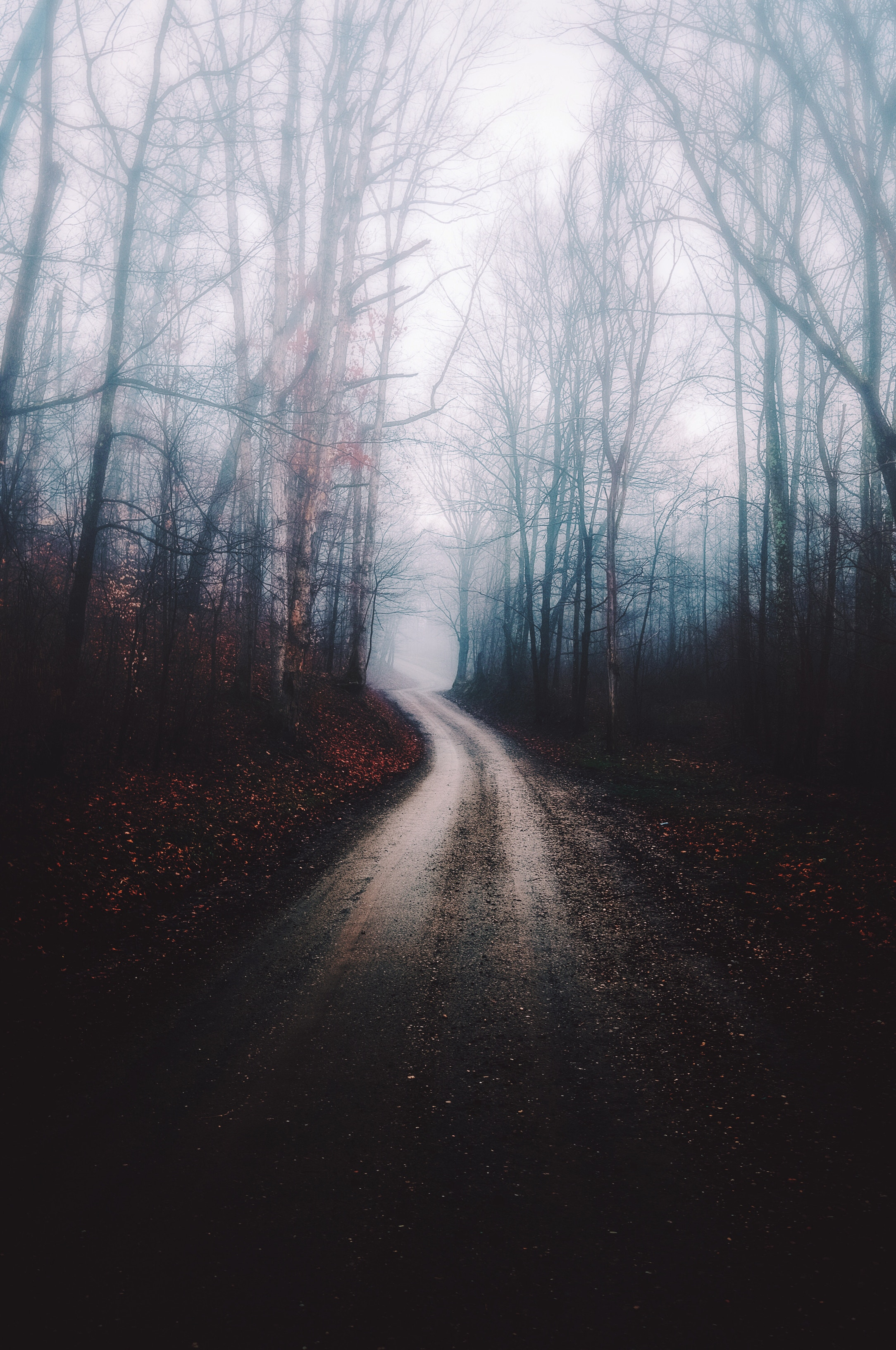 79321 Screensavers and Wallpapers Path for phone. Download Nature, Trees, Autumn, Forest, Fog, Path pictures for free