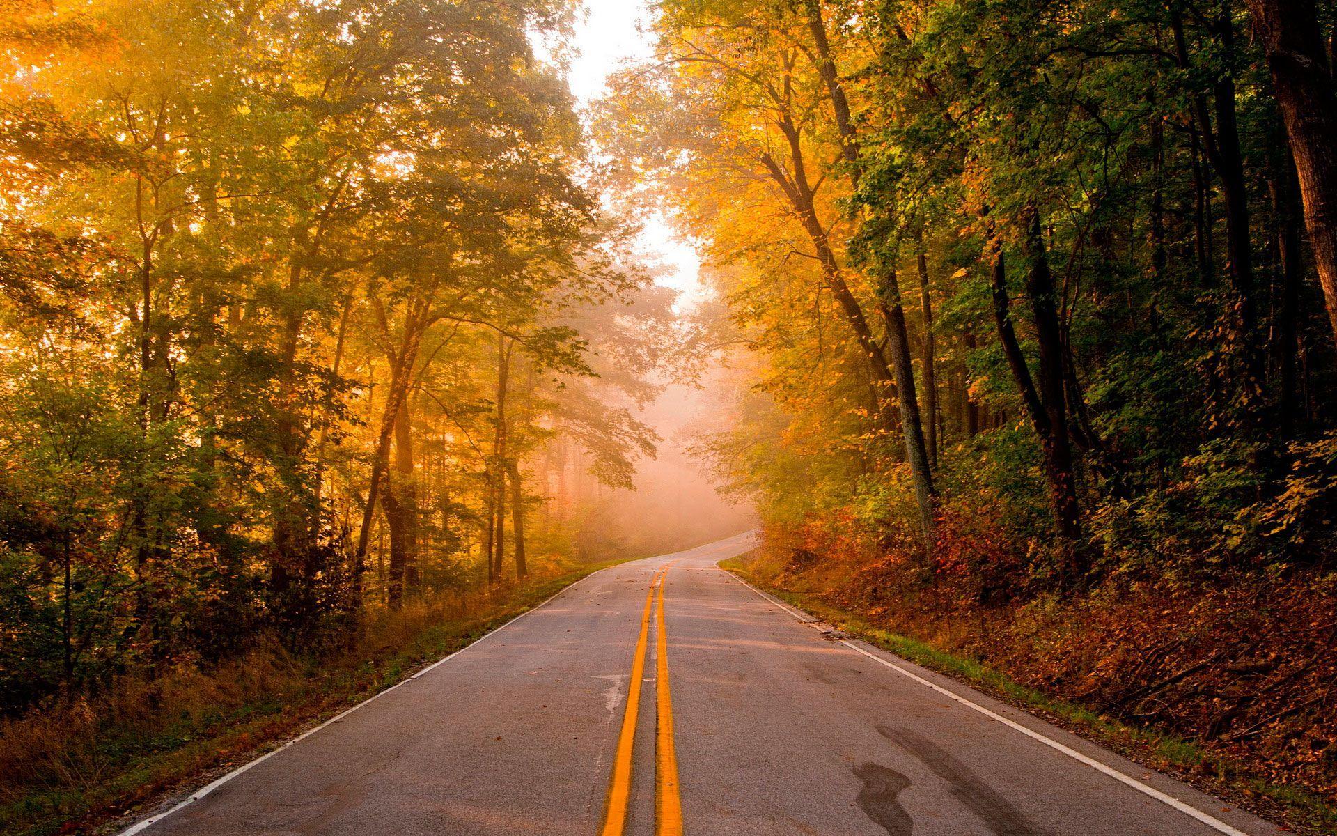 21956 скачать обои Пейзаж, Деревья, Дороги, Осень - заставки и картинки бесплатно