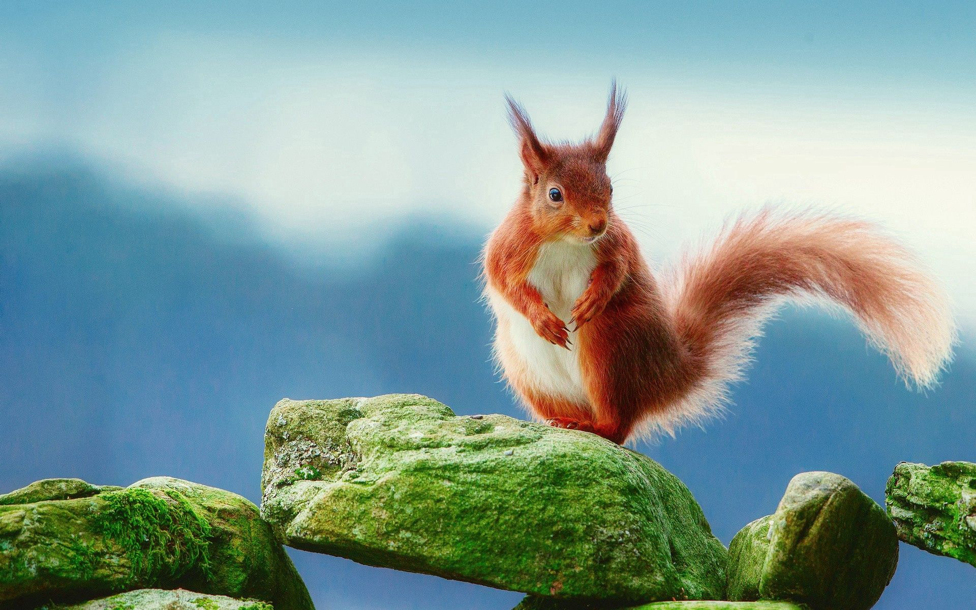 63950 download wallpaper Animals, Squirrel, Stones, Moss screensavers and pictures for free