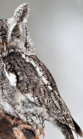 64638壁紙のダウンロード動物, フクロウ, 梟, 鳥, プレデター, 捕食者, 視力, 意見, 睡眠, 夢-スクリーンセーバーと写真を無料で