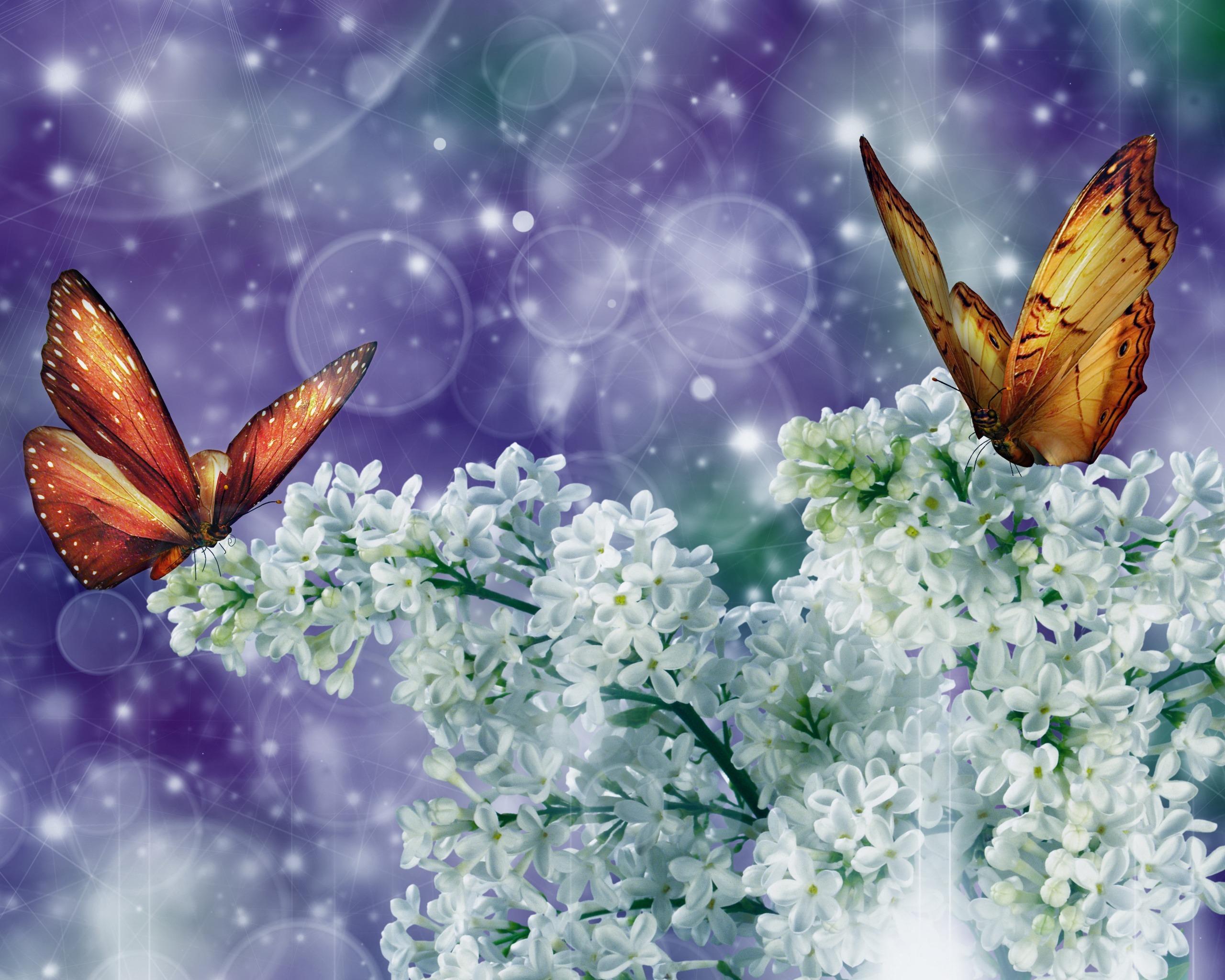 22018 скачать обои Рисунки, Бабочки, Насекомые - заставки и картинки бесплатно