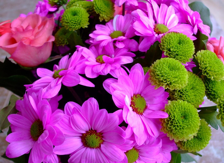 99630 скачать обои Цветы, Роза, Крупный План, Яркие, Хризантемы - заставки и картинки бесплатно