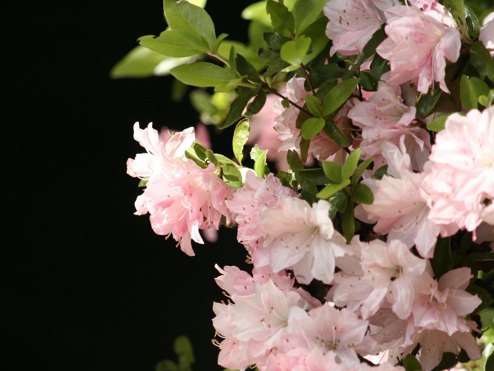 10605 descargar fondo de pantalla Plantas, Flores: protectores de pantalla e imágenes gratis