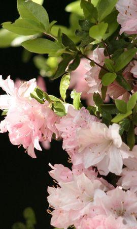 10605 скачать обои Растения, Цветы - заставки и картинки бесплатно