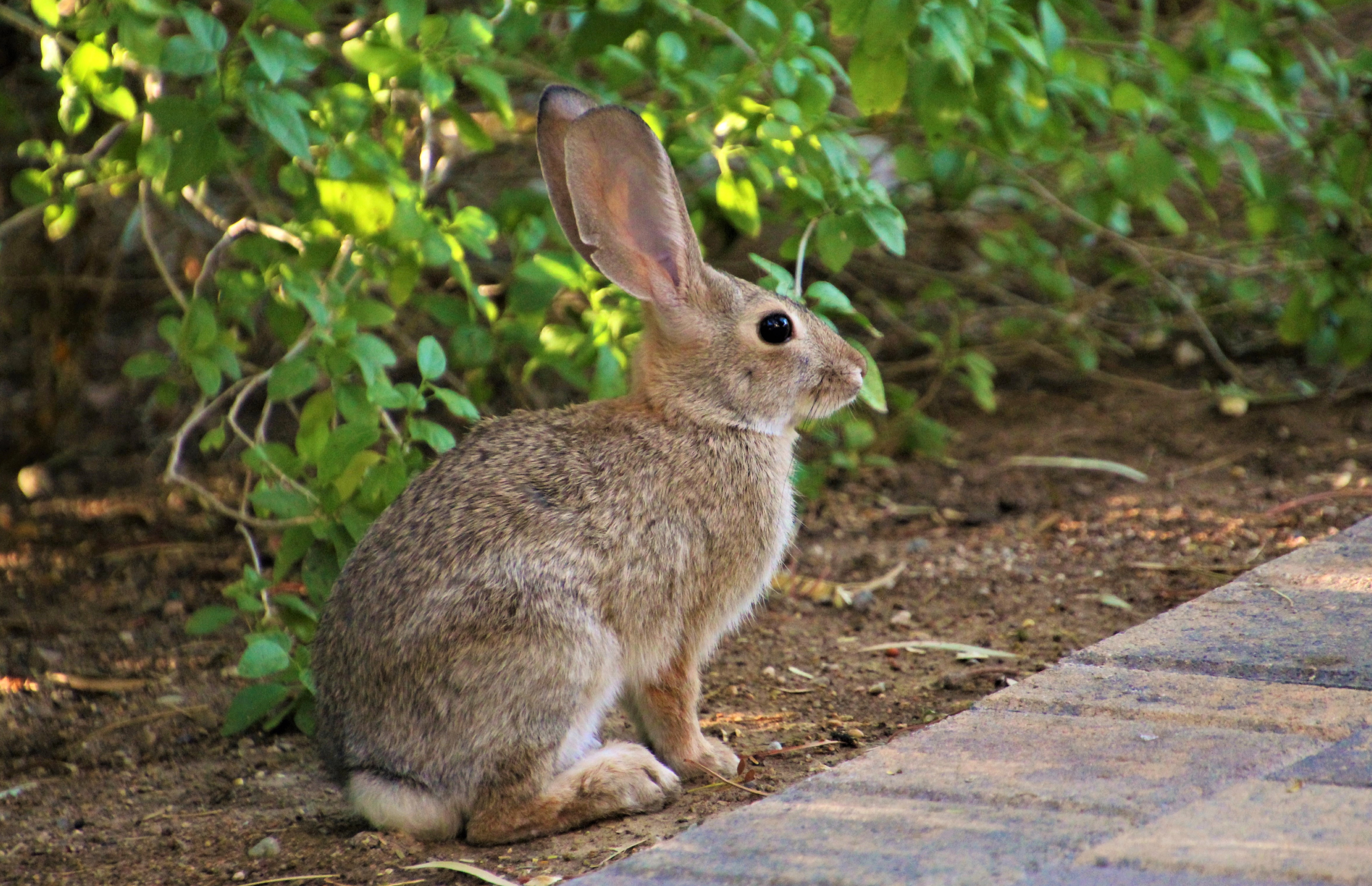 66974 download wallpaper Animals, Rabbit, Animal, Fluffy, Profile, Sight, Opinion screensavers and pictures for free