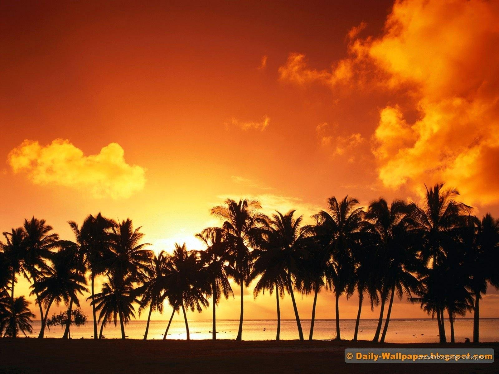 4024 скачать обои Пейзаж, Деревья, Закат, Небо, Пальмы - заставки и картинки бесплатно