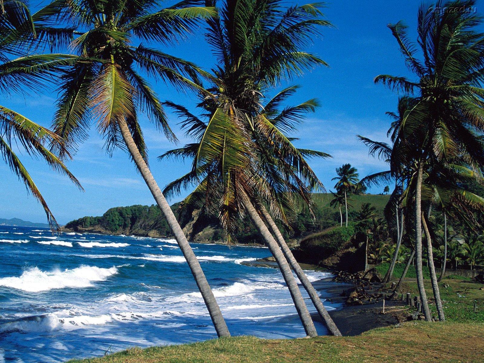 15555 descargar fondo de pantalla Paisaje, Agua, Árboles, Mar, Palms: protectores de pantalla e imágenes gratis