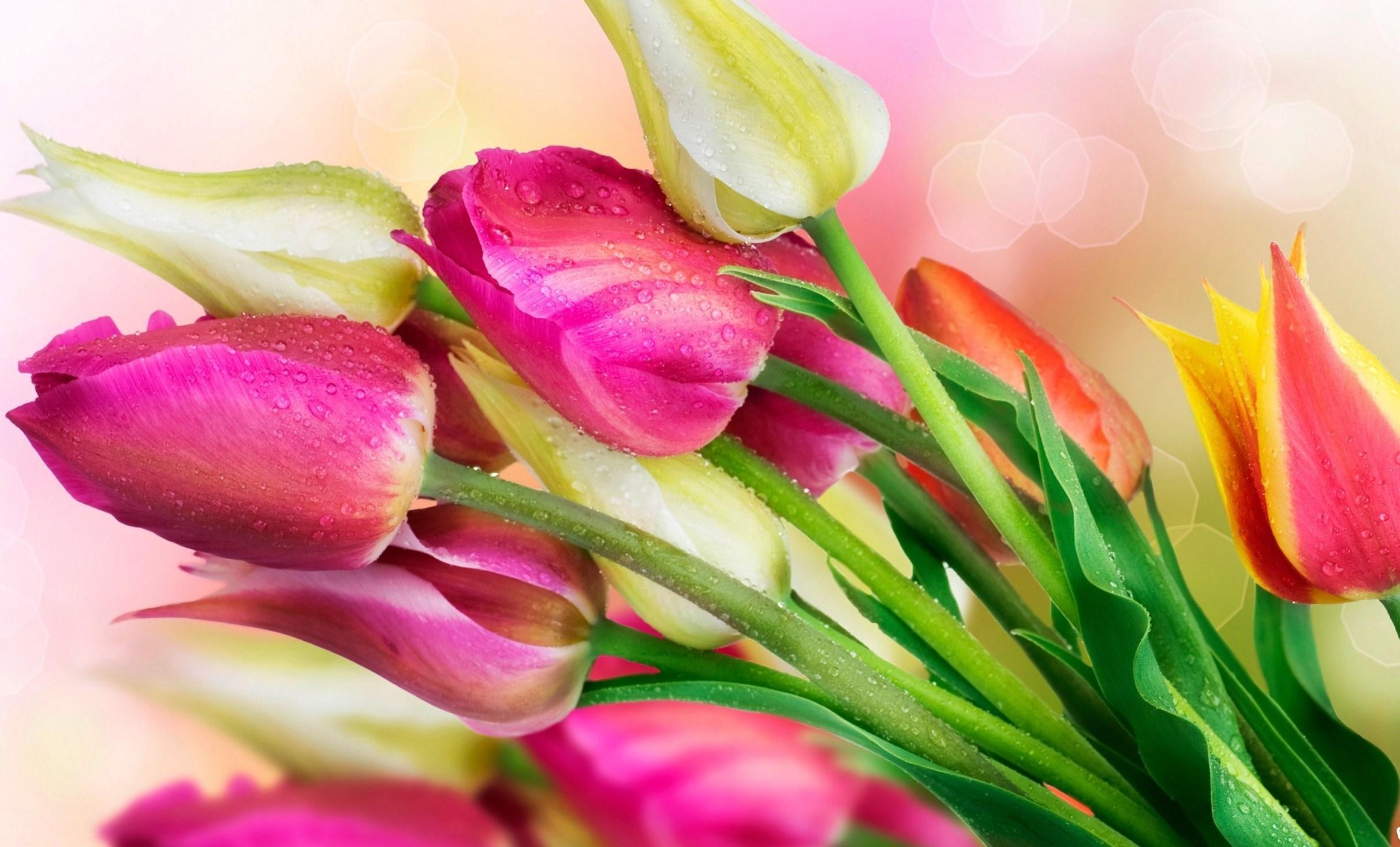 20894 скачать обои Растения, Цветы, Тюльпаны, Букеты, Капли - заставки и картинки бесплатно