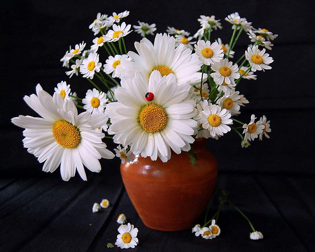 90805 скачать обои Ромашки, Букет, Цветы, Лето, Ваза, Божья Коровка - заставки и картинки бесплатно