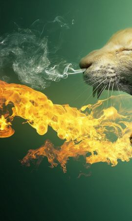 16182 download wallpaper Funny, Animals, Cats, Art screensavers and pictures for free