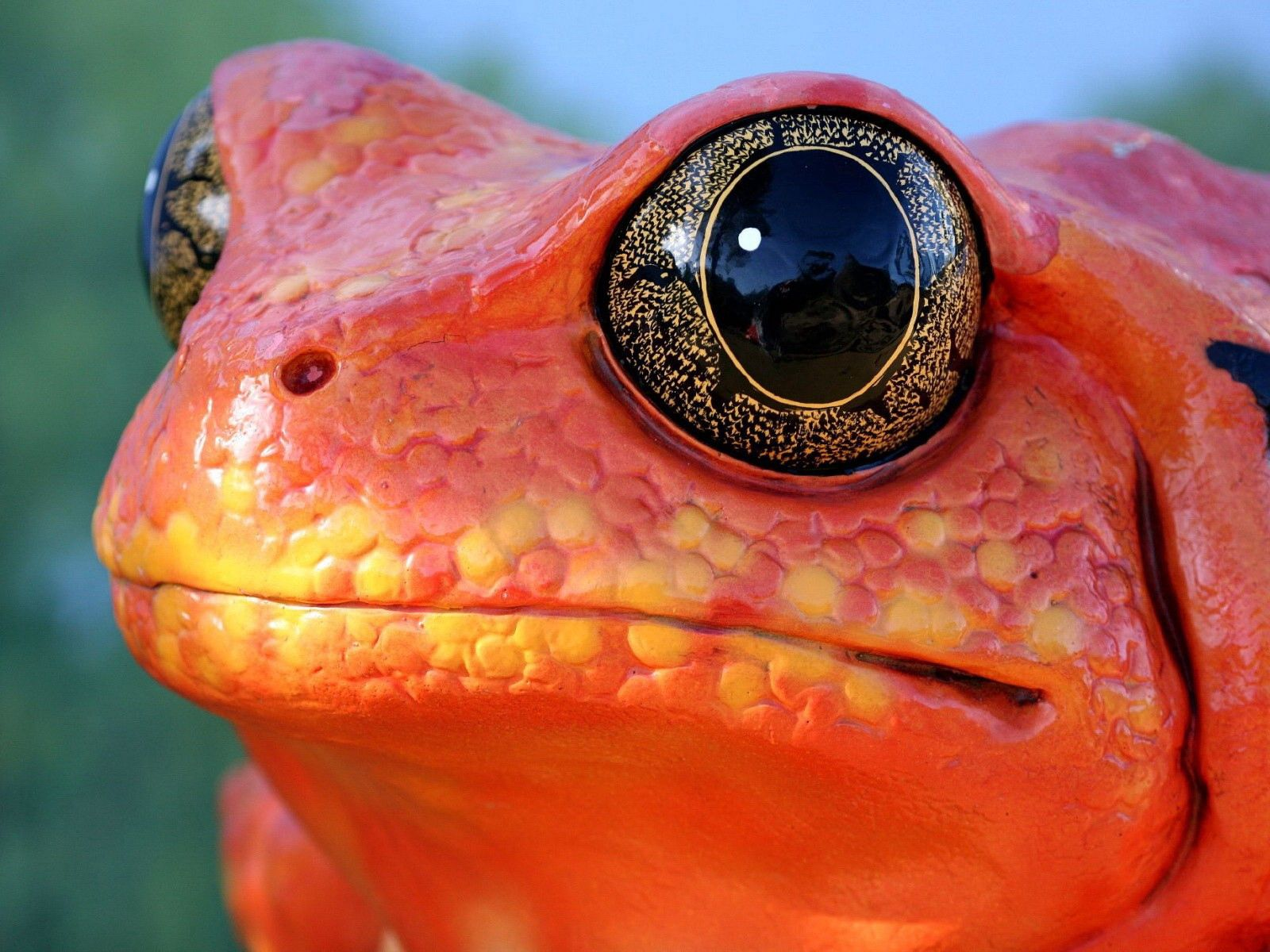 154273 download wallpaper Animals, Frog, Muzzle, Reptile, Color screensavers and pictures for free